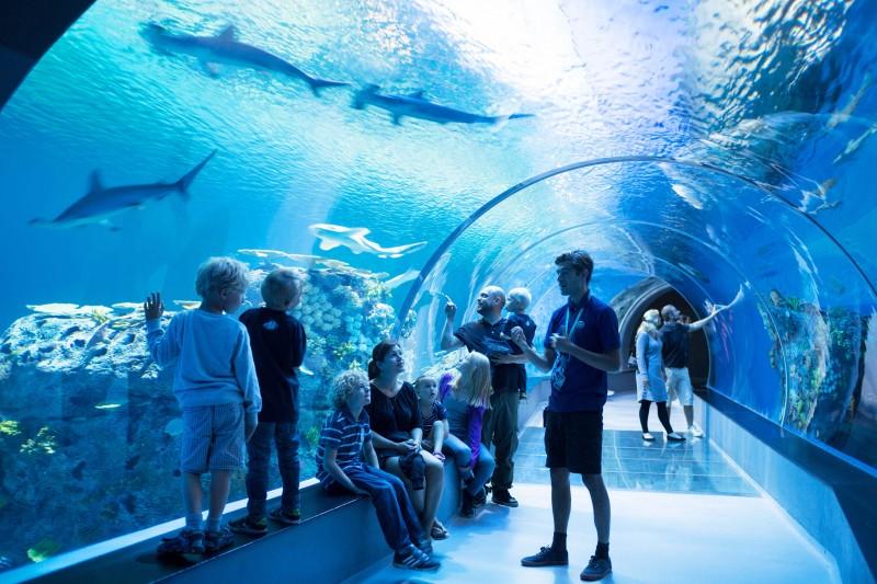 Van(d)vittig børnefødselsdag med farvestrålende fisk og hammerhajer på Den Blå Planet