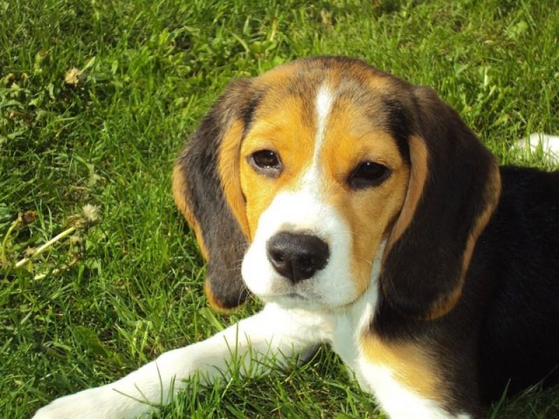 Forkæl din hund med hundetilbehør fra dollardog.dk
