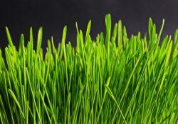 Få nemt den græsplæne, som du ønsker, ved at plante græsfrø