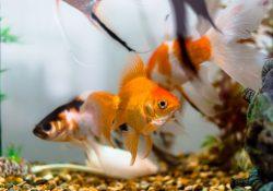 Find det helt rigtige akvarie til dine fisk