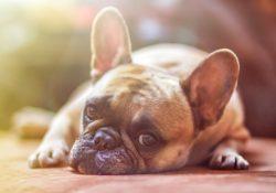 Huntercph.dk - når hundeudstyret skal have top kvalitet